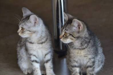 Troy and Dobby.jpg